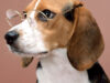 Cientistas analisam cérebro de cães e concluem que eles também são 'pessoas'